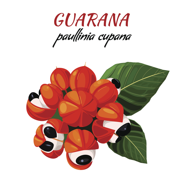 Guarana växten
